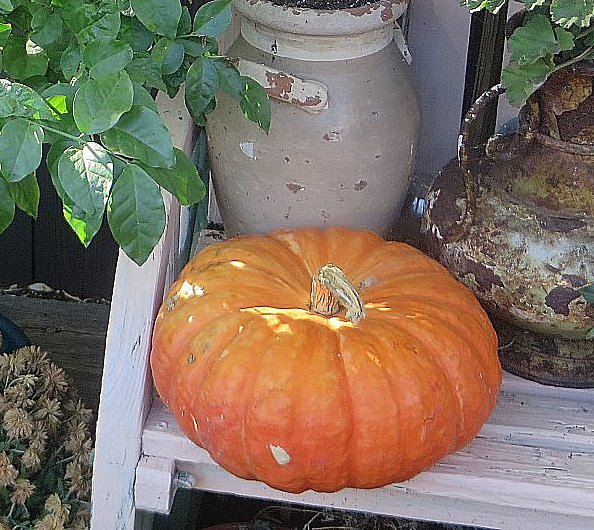 fairytale  pumpkin