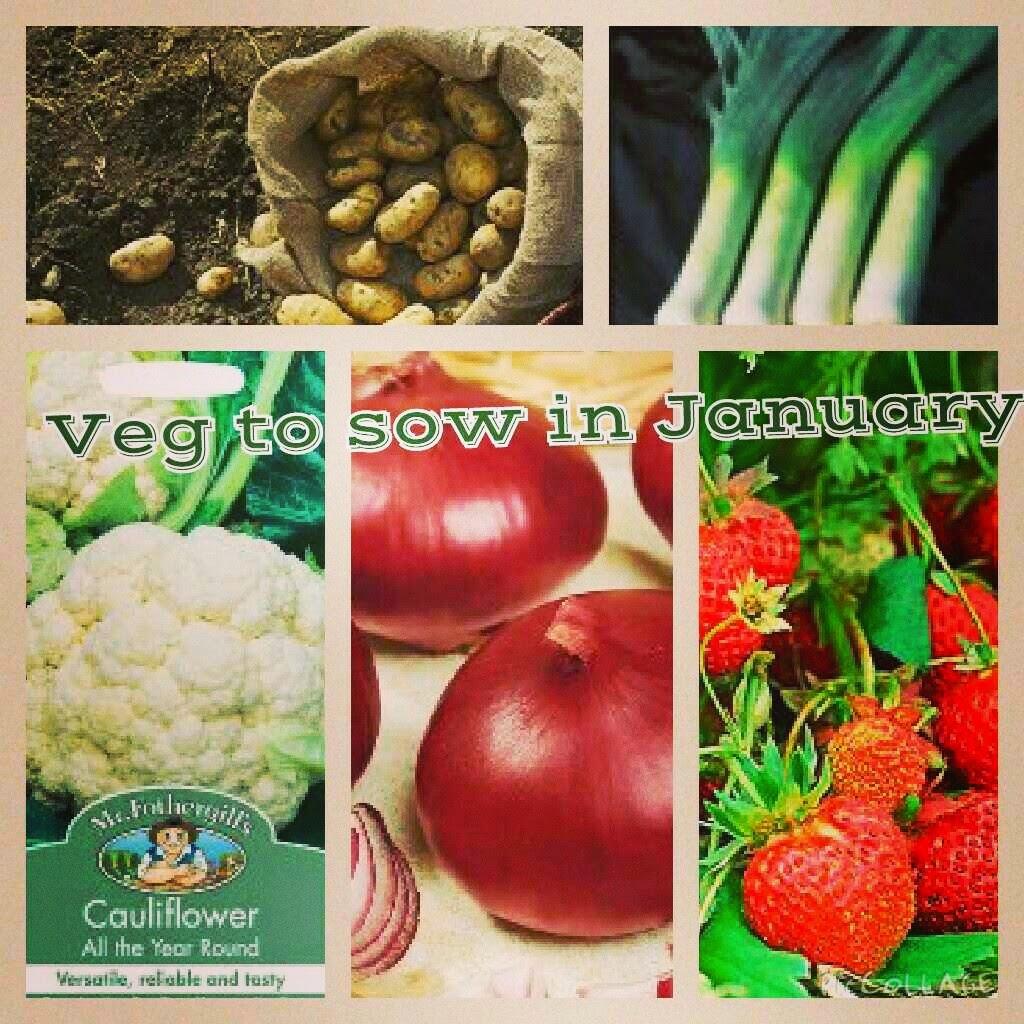 growing vegetables in January