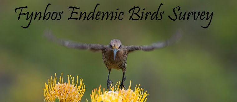 Fynbos Endemic Birds Survey hosted by Blue Hill Escape
