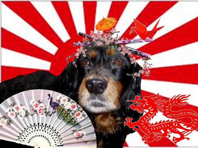 Molly The Wally Goes To Japan!
