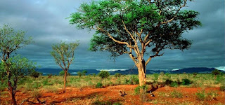 Kruger National Park, Sydafrika