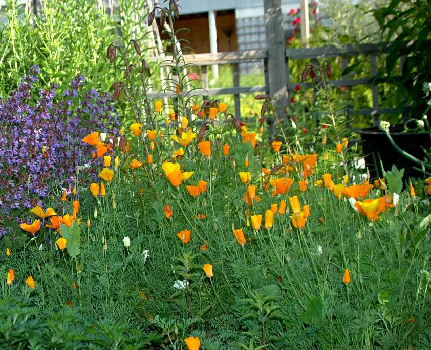 how to grow annuals from seed