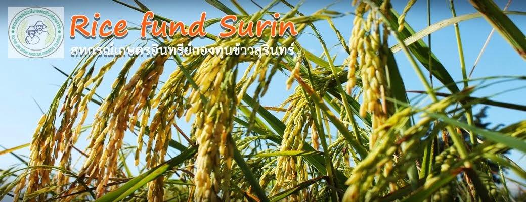 Ricefund Surin