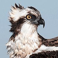 Birding Odiel Marshes