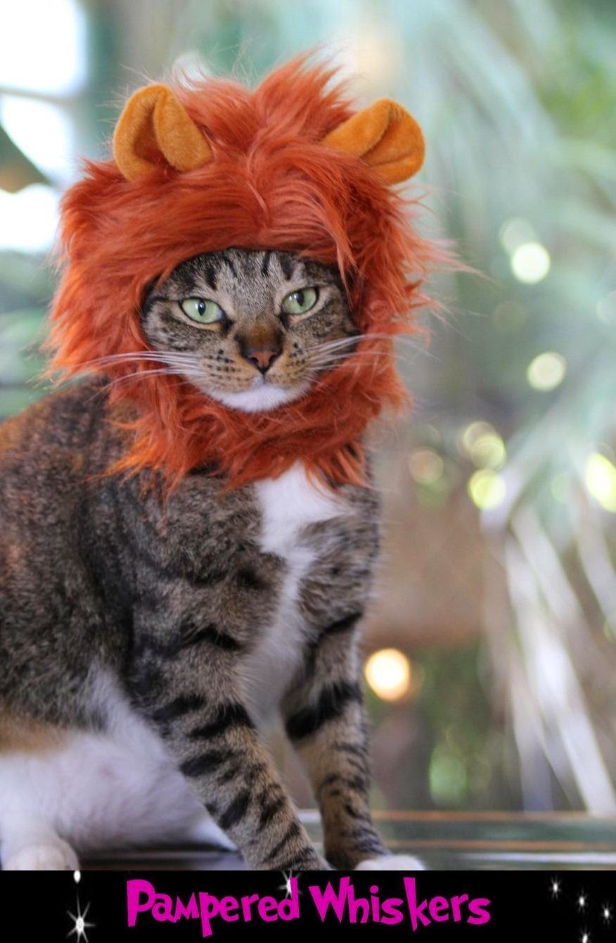 15 Coolest and Awesome Cat Gad s