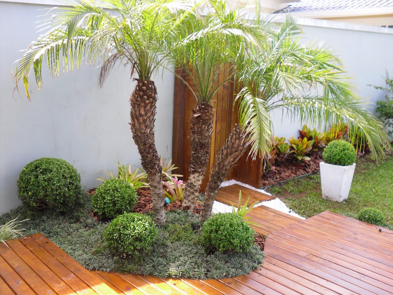 plantas jardim litoral : plantas jardim litoral:Postado por Mario de Mendonça Lima Heck