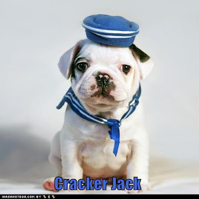 white bull dog puppy dressed as a sailor
