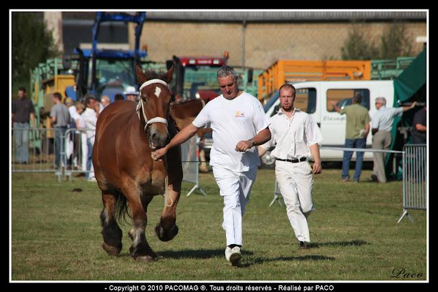 concour cheval de trait à la foire Commerciale et Agricole de Sedan