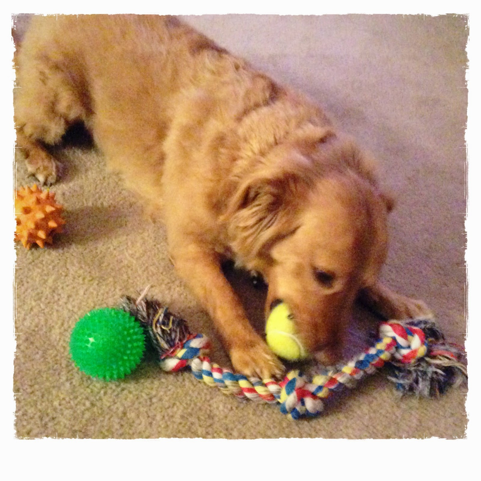 So many dog toys, so little time: Winchester on The 3 Rs Blog