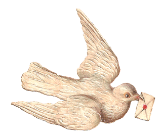 stock white dove image