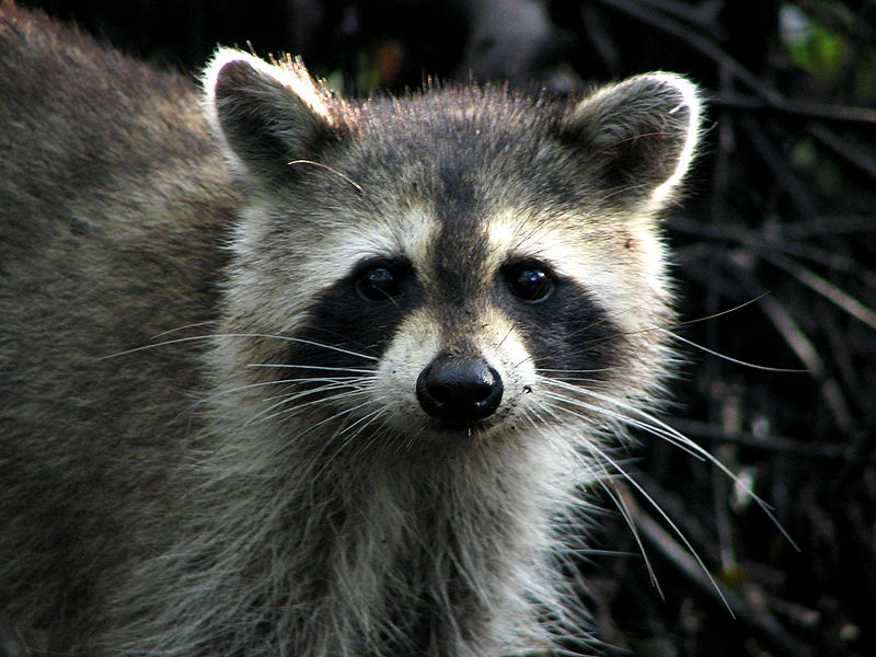 Let S Save Local The Coon Vs The Stockpile