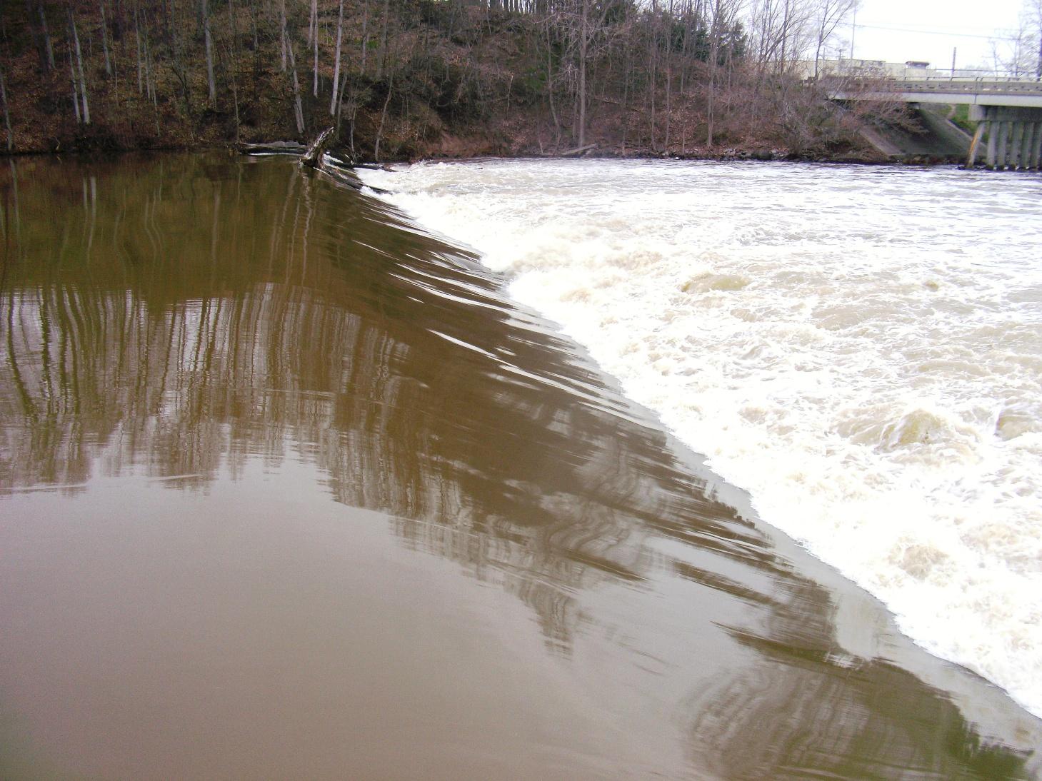Michigan steelhead report lyons grand river fish ladder for Grand river fishing