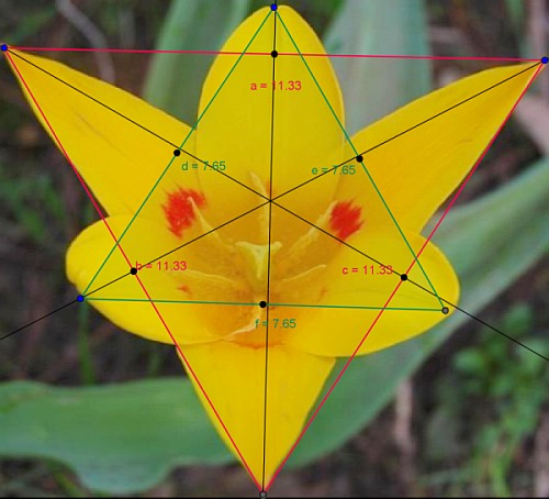 Isosceles Triangle In Nature An equilateral triangle,