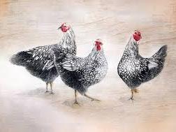 Four Calling Birds...
