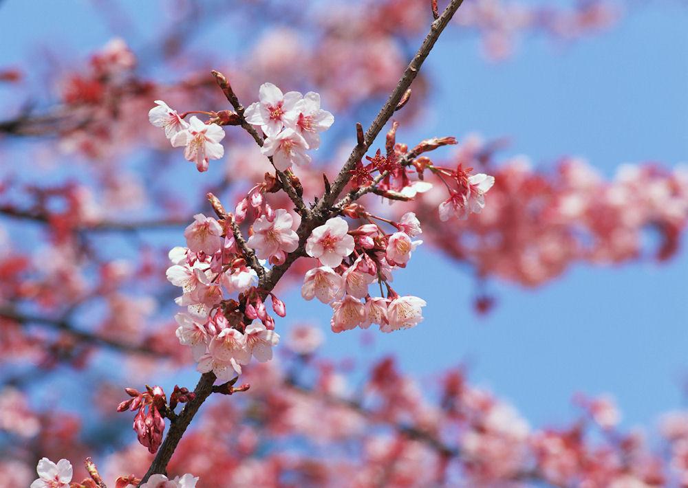 idool Flores de Primavera I 20 imgenes muy lindas photos of