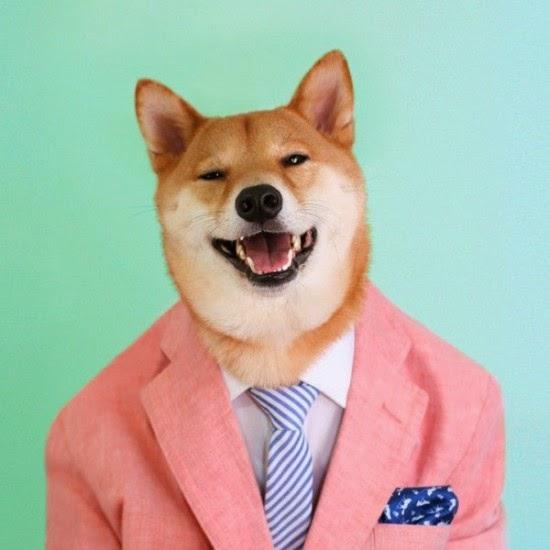 يلبس الكلب بدلة تقليدية