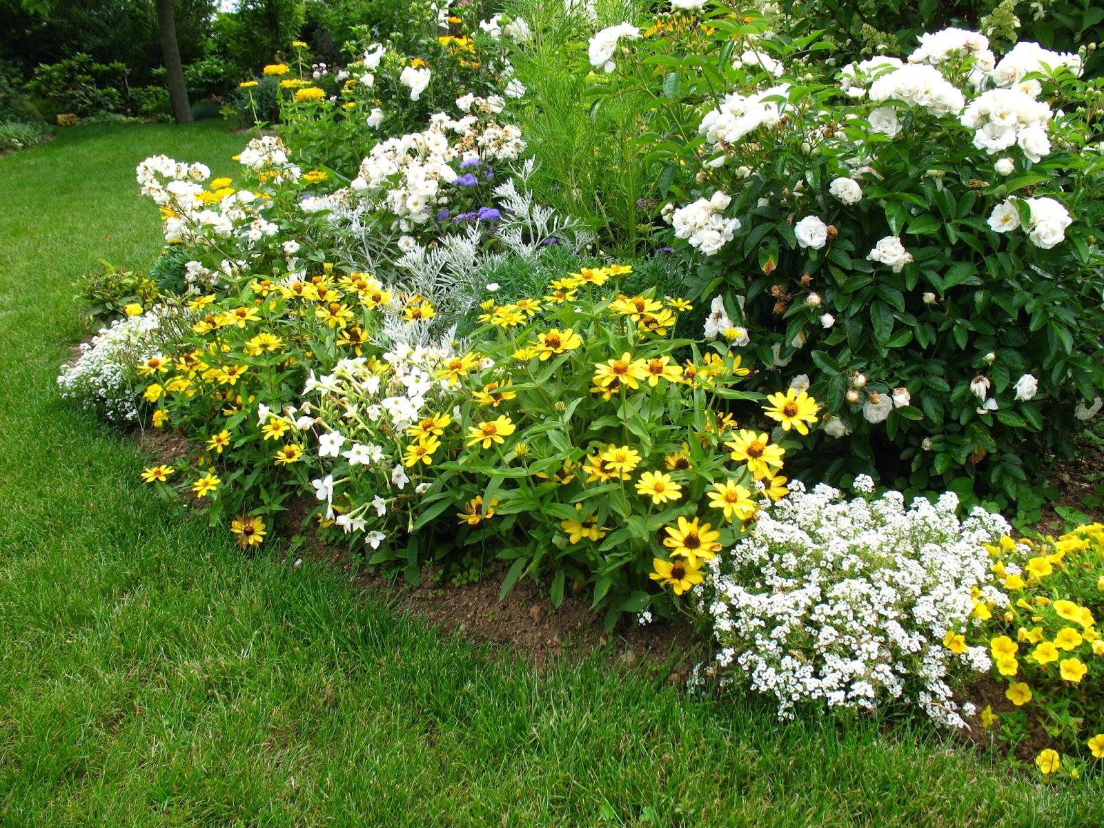 Roses du jardin Chêneland: Zinnia, une fleur épatante....