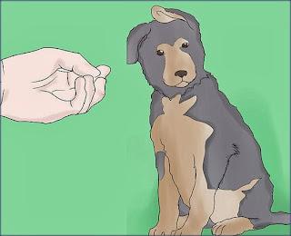 تدريب الكلب الولف و البلجيكي