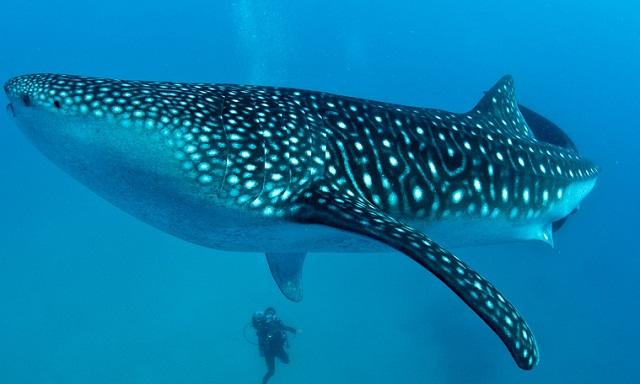 Pelestarian Taman Nasional Laut Sawu Perlu Melibatkan Masyarakat