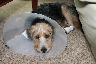 Story: Tucker the Terrier, Temporarily Tethered