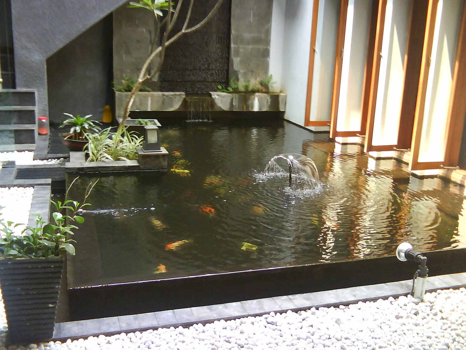 contoh membuat kolam ikan sederhana di halaman rumah new