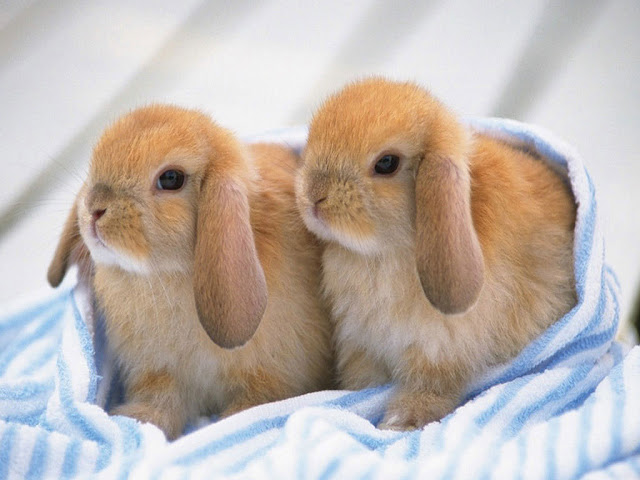Cute Rabbits 1