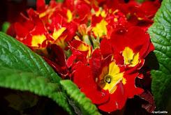 Flores, el Aguaje