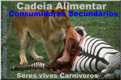 Foto mostrando um tigre se alimentando de uma zebra. O herbívoro, consumidor primário, servindo de alimento para o carnívoro, consumidor secundário