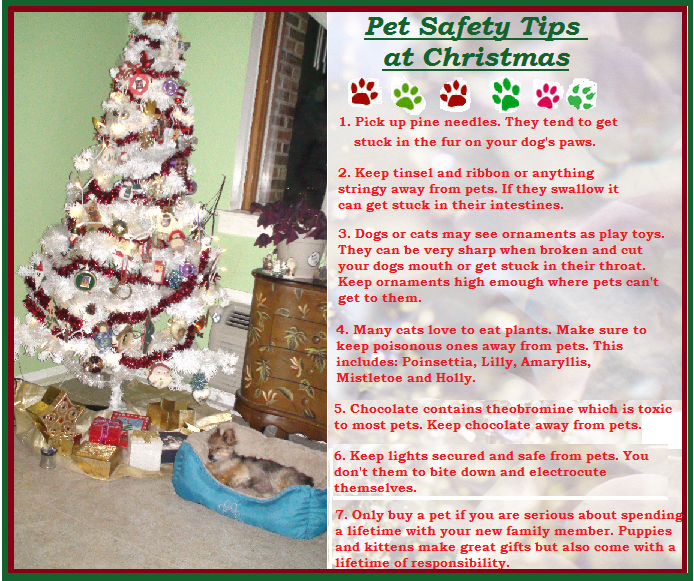 This Time Of Year That A Reminder Easy Safety Tips Is Likely In Order Here Are Few Weve Put Together For You And Yours Holiday Season