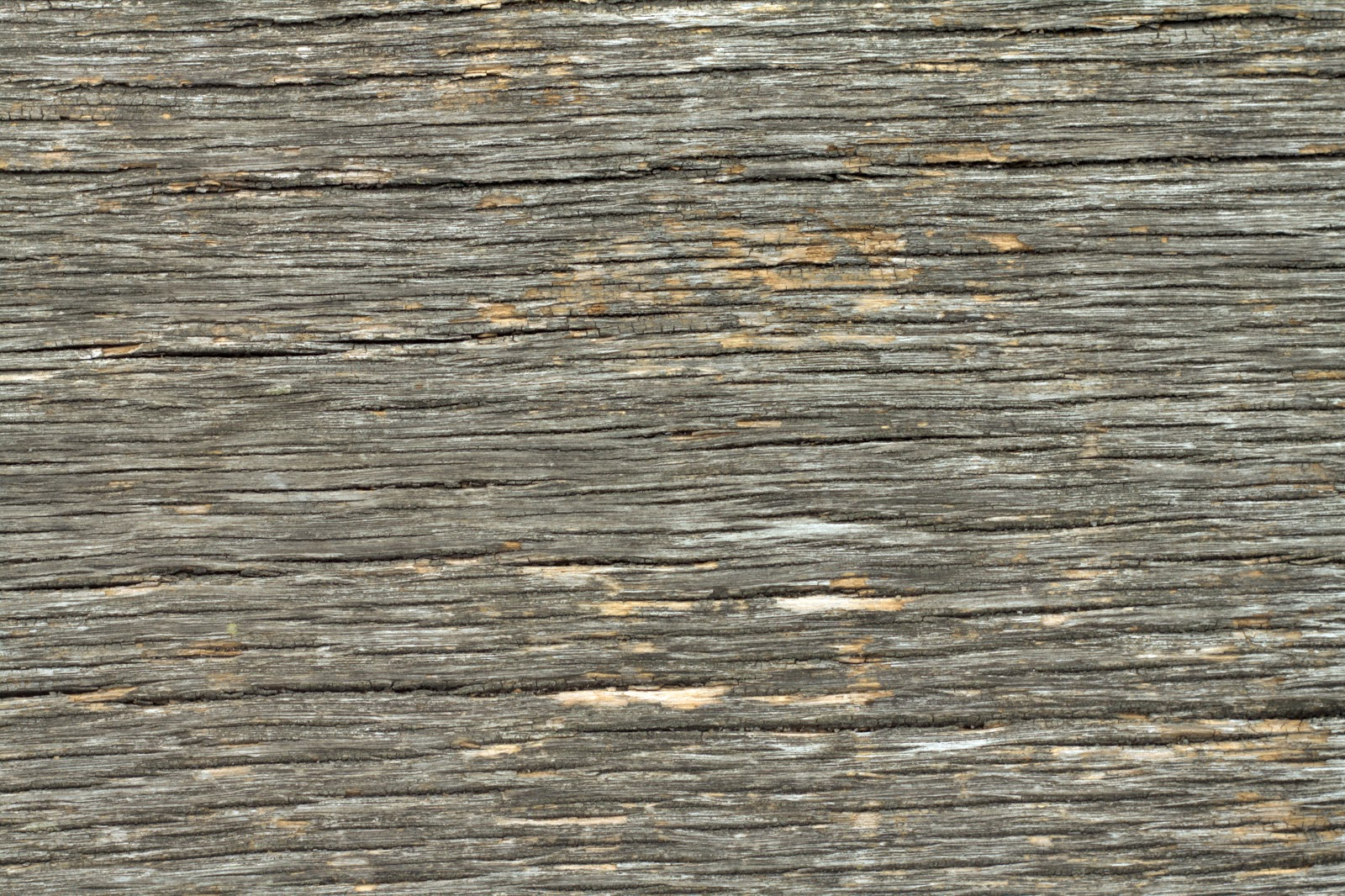 (Wood 21) dry cracked plank tree bark texture
