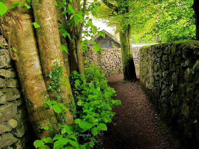 The Waterfall Walk , Oughterard, Galway, Ireland
