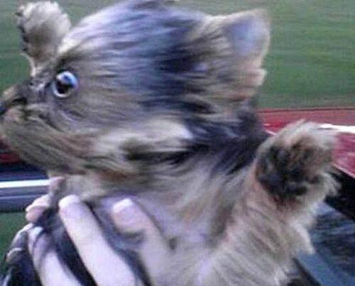 Imagenes graciosas - Página 3 Perros-viento-45