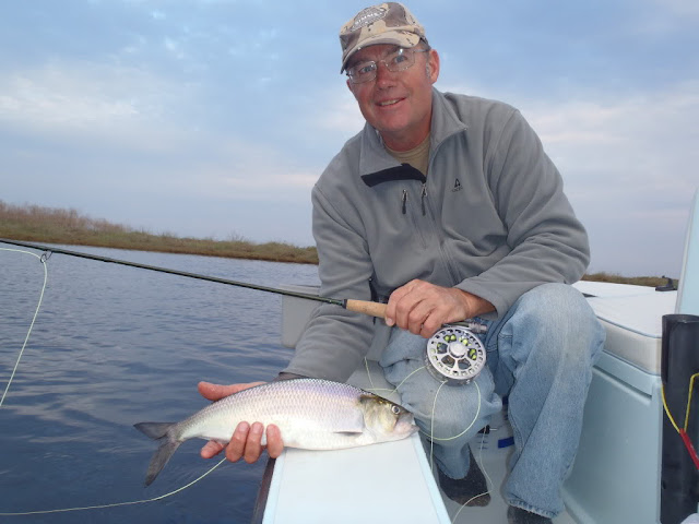 st johns river florida shad fly fishing