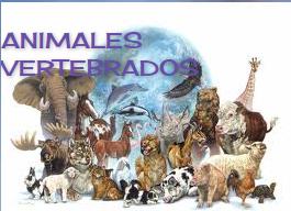 http://nutricionseresvivosbiologiaonce.blogspot.com.es/2011/08/respiracion-de-los-animales-vertebrados_25.html