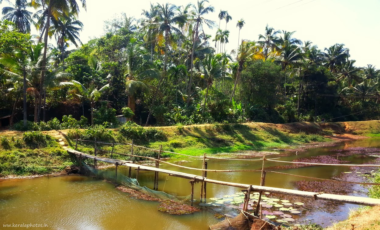 Thrissur natural pictures - Kerala Photos
