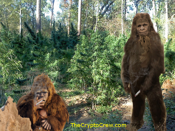 Bigfoot smoking a joint