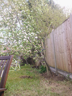 The Staked Apple Tree