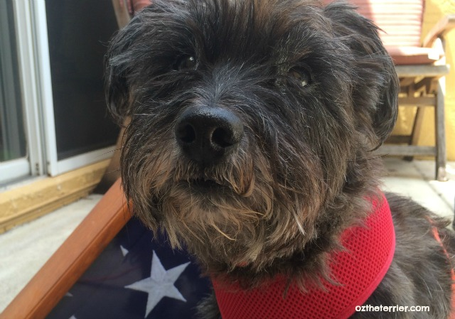 Make dog-friendly plans for the 4th of July