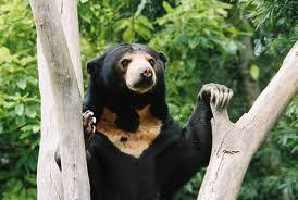 Động vật kì lạ gấu chó