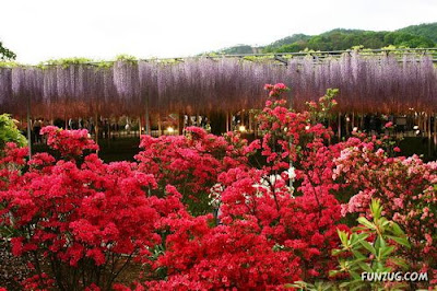 Amazing Flowers in Japan