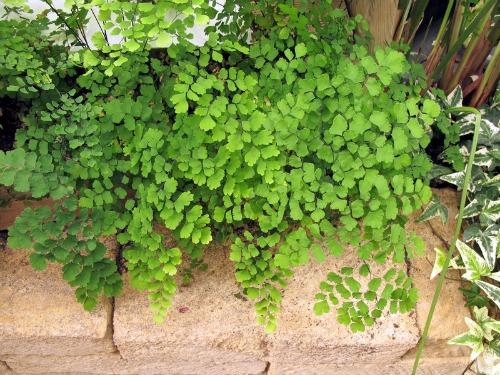 Plantas y flores plantas para terrarios - Plantas tropicales interior ...