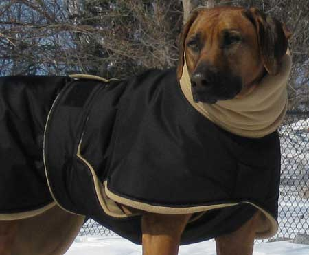 dog winter coats: Does Your Dog Need Winter Coats?