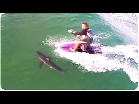 Paddleboarder Nearly Runs Over Shark Close Call