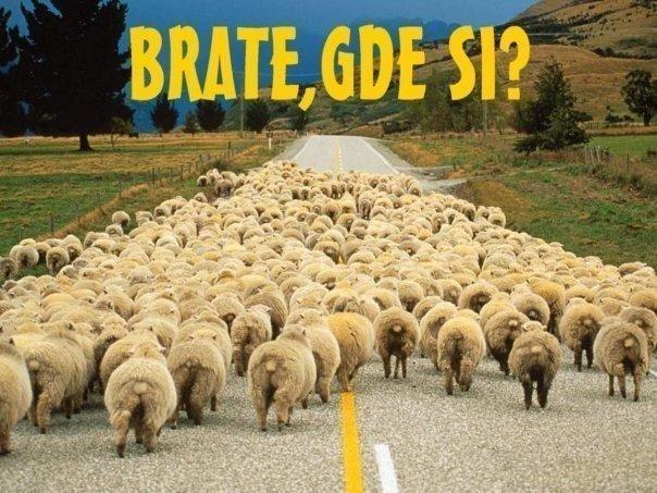 http://2.bp.blogspot.com/-K5efFnx_8BA/TnLwRj0Ct6I/AAAAAAAABH0/COMuyzzIgPQ/s1600/sheep.jpg