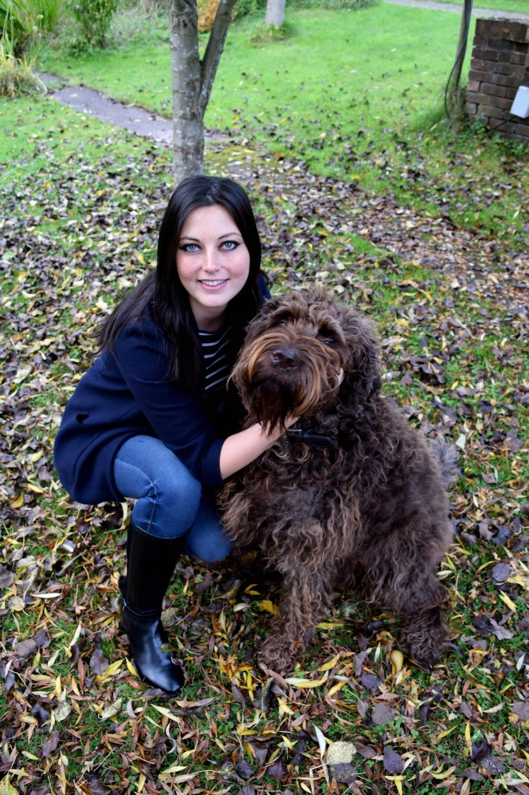 Labradoodle and autumn