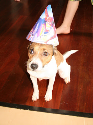 Jack Russell Dog wearing party hat