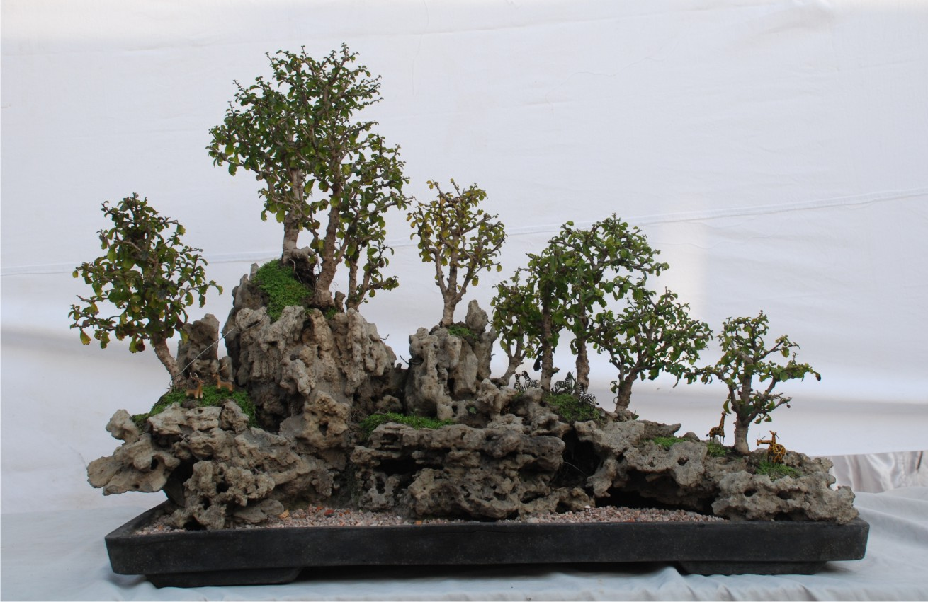A Delhi Gardener39s Blog Bonsai Exhibition At The Delhi Gymkhana