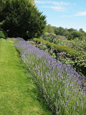 Lavendar at Standen House garden, Sussex