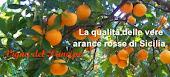 Azienda Agricola Vigna dei Principi