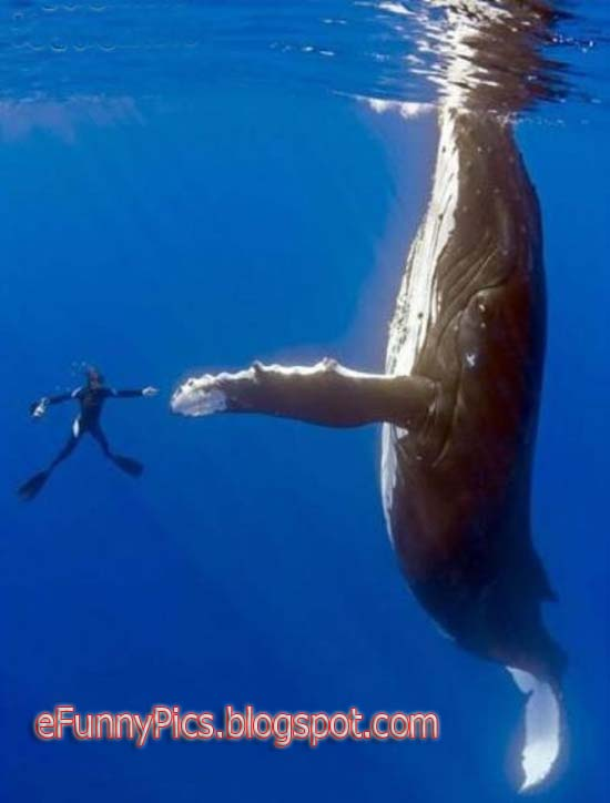 High Five, Dude!